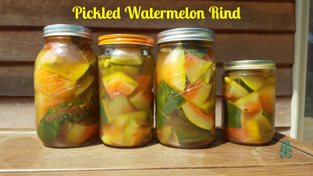 Recipe: Pickled Watermelon Rind